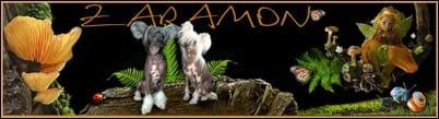 Zaramon Szfinx Csupaszmacska Tenyészet és Kínai Mez
