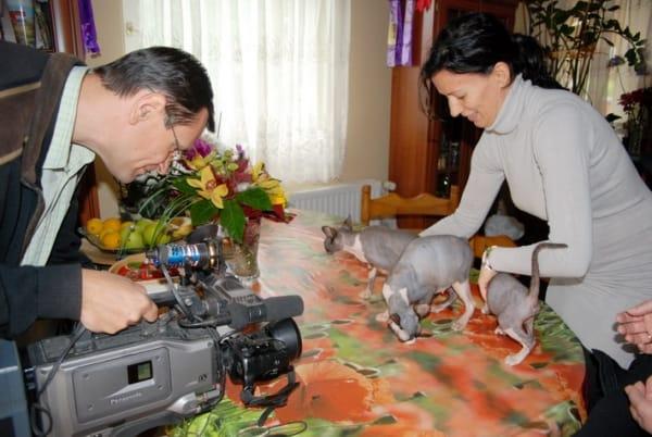 Felfedezte a média a kecskeméti macskahölgyet
