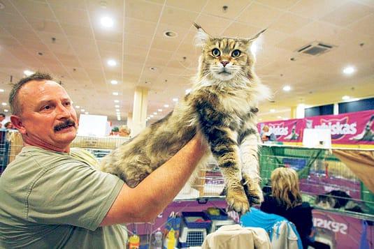 Mi vagy? A kanadai szfinx különleges macska
